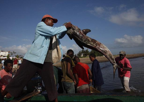 piratas-en-somalia-kenia-malindi-bajando-la-buena-pesca-foto-ap.jpeg
