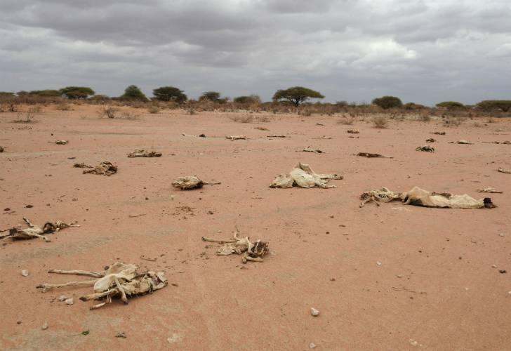 somalia-hambruna-y-sequia-en-los-caminos-del-cuerno-de-africa-foto-afp.jpg